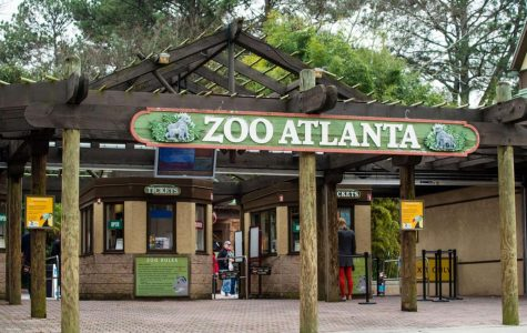 Senior Rosie Driscoll and freshman Blake Horne are participants in the Volunteen Program at Zoo Atlanta. Driscoll and Horne work at the zoo regularly throughout the year, doing everything from interacting with guests to cleaning animal habitats.