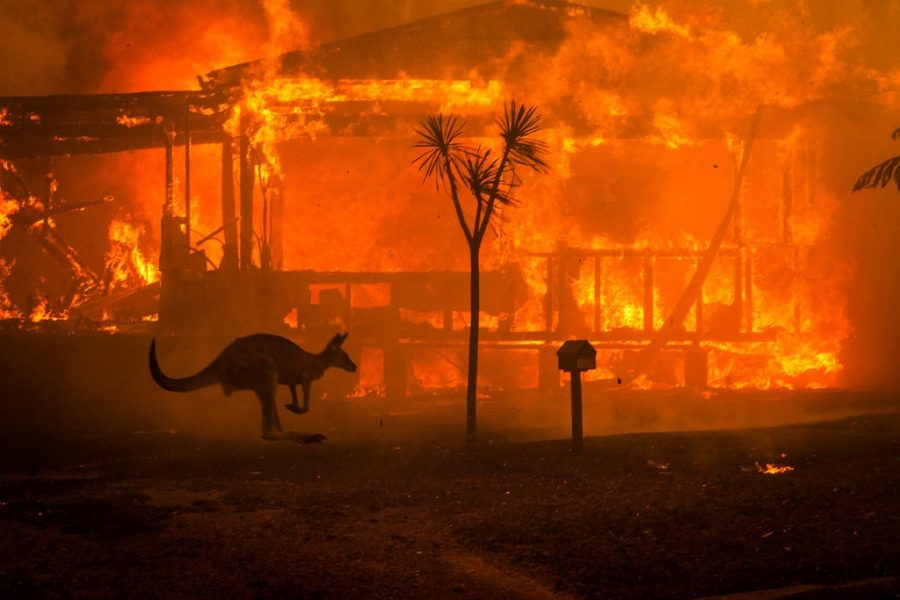 Who is to blame for the Australia wildfires and why is there so much misinformation?