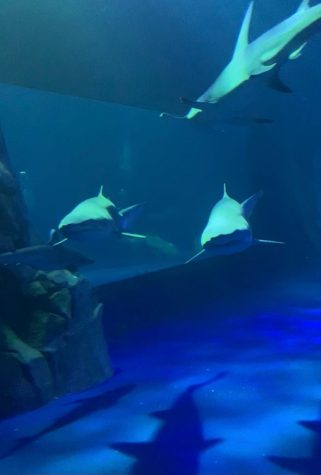 The new shark exhibit at the Georgia Aquarium features five different species of sharks and 1.2 million gallons of water.