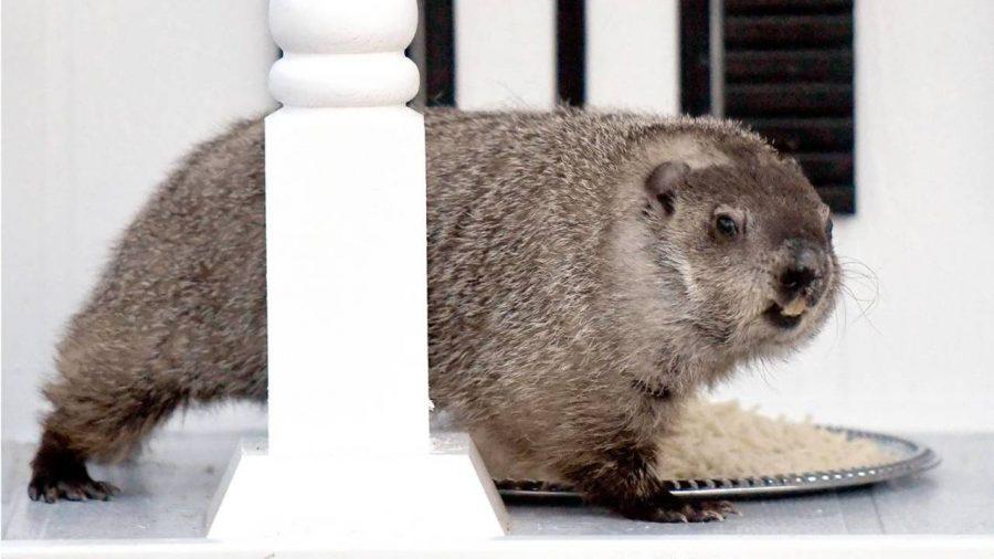 Groundhog Day deserves more appreciation